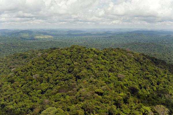 The Brazilian Amazon rainforest. (Photo: Haroldo Palo Jr.)