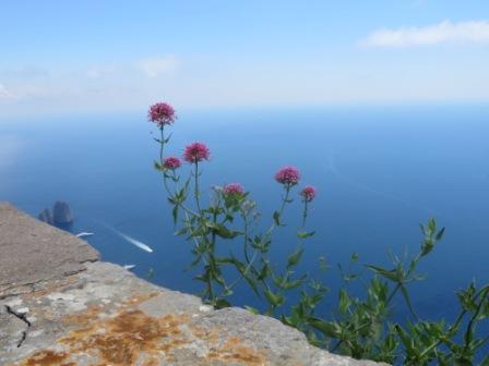 gratitude_capri flower_c